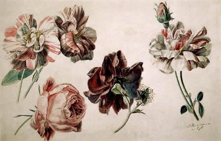 Sir Lawrence Alma-Tadema - Roses