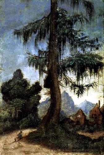 Albrecht Altdorfer - Paysage avec arbre