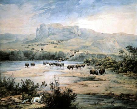 Karl Bodmer - Büffelherde am Oberen Missouri