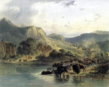 Karl Bodmer - Bison- und Elchherde am oberen Missouri