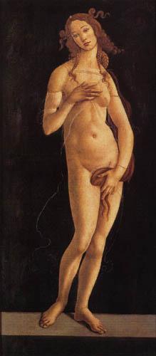 Sandro Botticelli - Venus