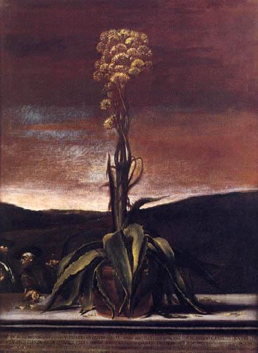 Giuseppe Maria Crespi - Aloe