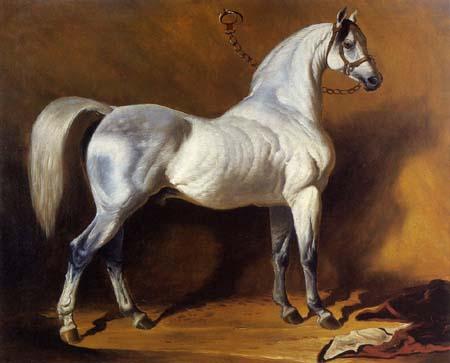 Alfred de Dreux (Dedreux) - Un semental árabe
