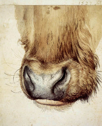 Albrecht Dürer - The mouth of an ox