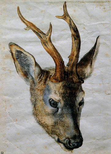 Albrecht Dürer - The head of a roe buck