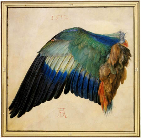 Albrecht Dürer - Blaurackenflügel