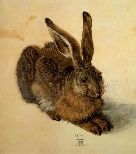 Albrecht Dürer - An hare