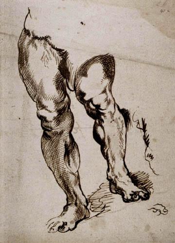 Sir  Anthonis van Dyck - A leg, Study