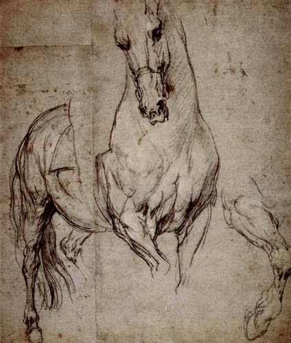 Sir  Anthonis van Dyck - Étude de cheval