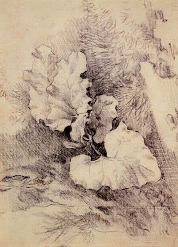 Thomas Gainsborough - Estudio de hojas