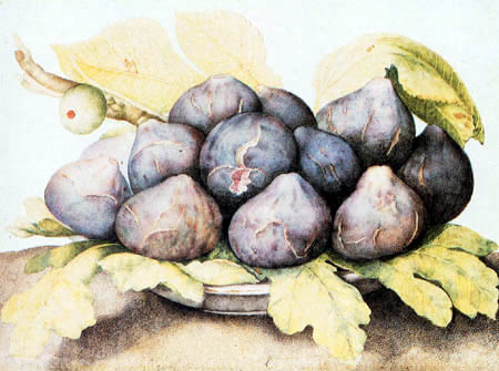 Giovanna Garzoni - A plate of figs