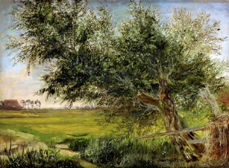 Jacob Gensler - An old willow