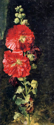 Jacob Gensler - A hollyhock