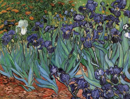 Vincent van Gogh - Schwertlilien