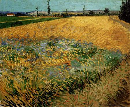 Vincent van Gogh - Kornfeld