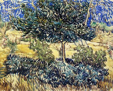 Vincent van Gogh - Bäume und Sträucher im Anstaltsgarten