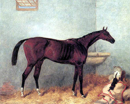 Harry Hall - Lord Lyon in Stable