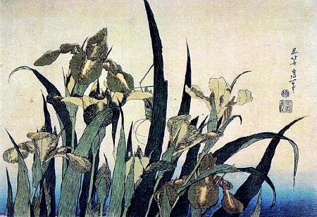 Katsushika Hokusai - Lys et cigale