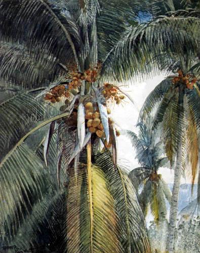 Winslow Homer - Kokosnusspalmen, Key West