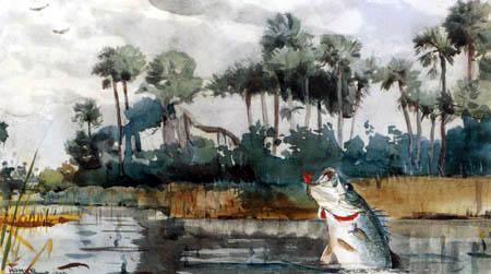 Winslow Homer - Une perche noire, la Floride