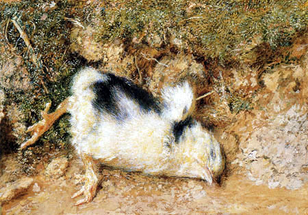 William Henry Hunt - John Ruskin´s polluelo muerto