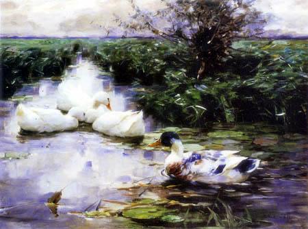 Alexander Koester - Four ducks