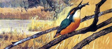 Wilhelm Kuhnert - Corrosive Kingfisher