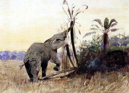 Wilhelm Kuhnert - Corrosive elephant