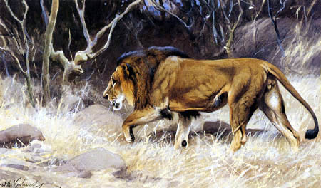 Wilhelm Kuhnert - Lion on the deerstalking