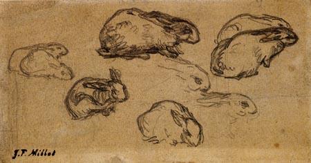 Jean-François Millet - Rabbit studies