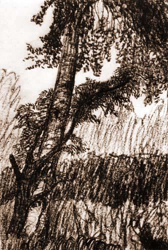 Otto Modersohn - Baumstämme
