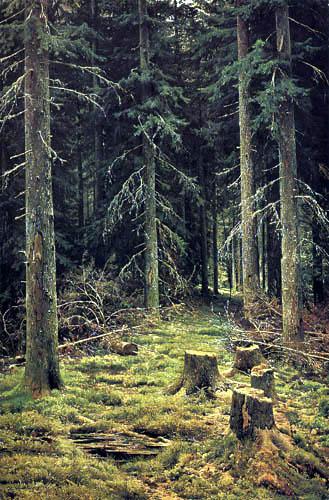 Iwan Schischkin - La forêt de sapin