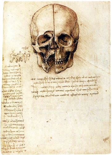 Leonardo da Vinci - Anatomie of the skull