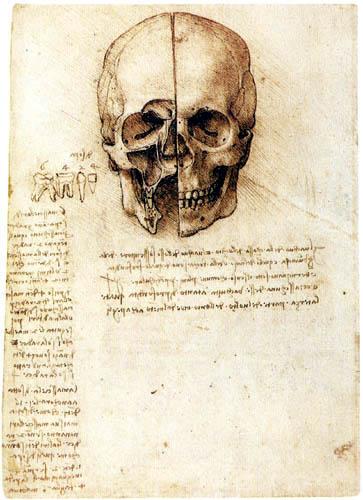 Leonardo da Vinci - Anatomie des Schädels