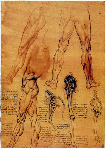 Leonardo da Vinci - Muskel -und Knochenstudie