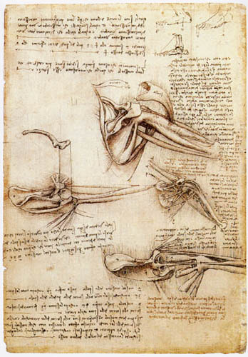 Leonardo da Vinci - Deep structure of the shoulder