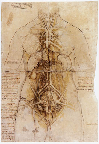 Leonardo da Vinci - Les organes de la femme