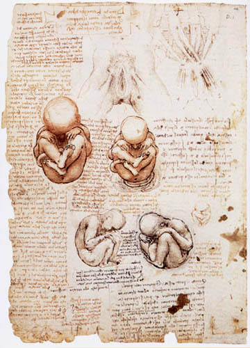 Leonardo da Vinci - The Fetus in the Uterus
