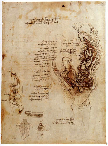 Leonardo da Vinci - Study on sexual intercourse