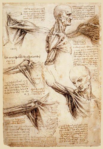 Leonardo da Vinci - Study of anatomy