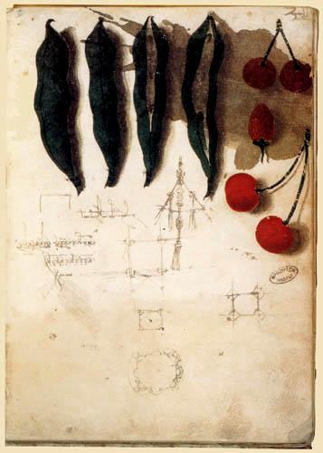 Leonardo da Vinci - Studienblatt mit Gemüse