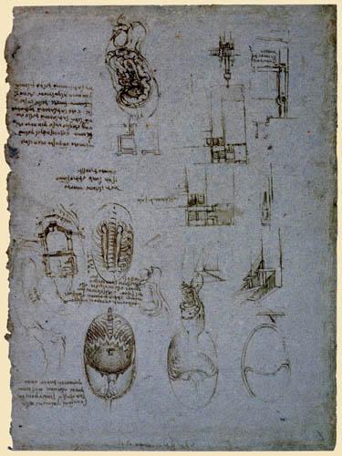 Leonardo da Vinci - Anatomiestudie mit Grundrissen