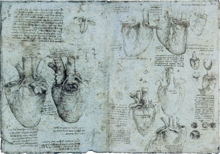 Leonardo da Vinci - Drawing of the cardiac anatomy
