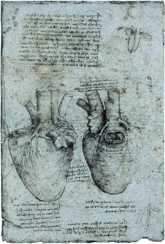 Leonardo da Vinci - Drawing of the cardiac anatomy, left