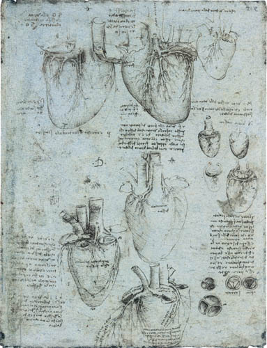 Leonardo da Vinci - Drawing of the cardiac anatomy, right