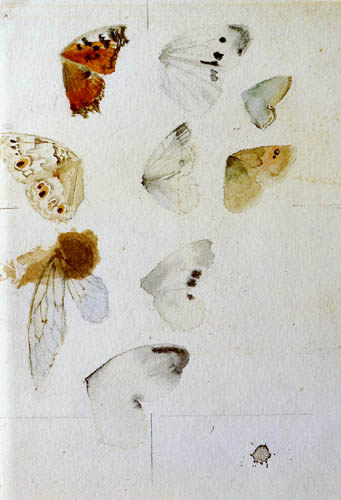 Anders Leonhard Zorn - Schmetterlingsstudie